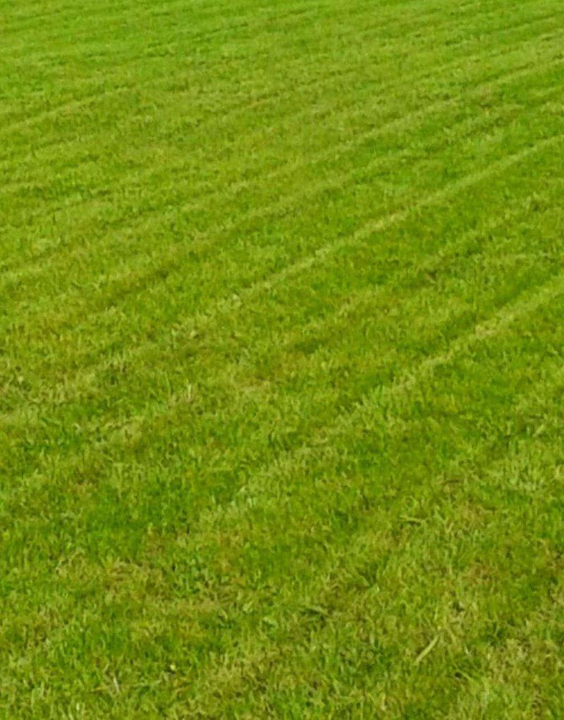cesped-natural-cultiva-jardineria-en-donostia-muestra