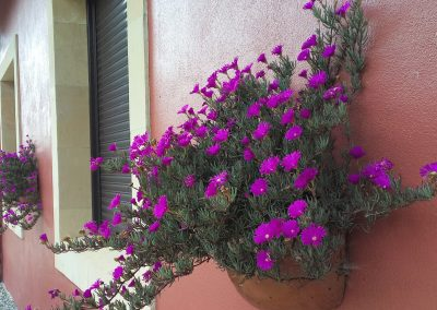 diseno-de-jardines-cultiva-jardineria-donostia-2