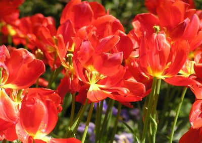 diseno-de-jardines-cultiva-jardineria-donostia-54