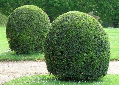 diseno-de-jardines-cultiva-jardineria-donostia-58