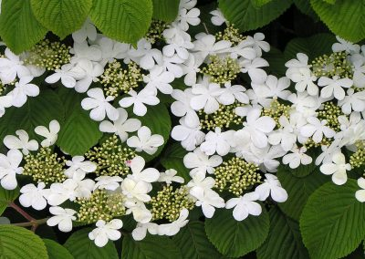 diseno-de-jardines-cultiva-jardineria-donostia-59