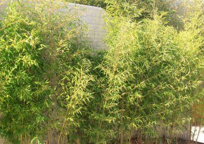 diseno-de-jardines-cultiva-jardineria-donostia-78
